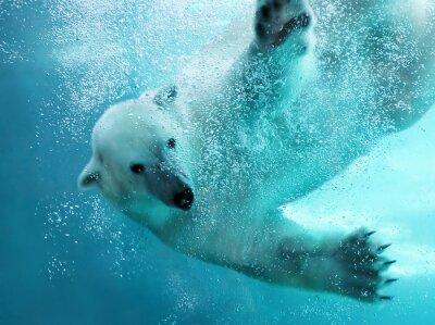 Cuadro Oso polar ataque submarino