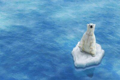 Cuadro Ours Blanc / Fonte des glaces
