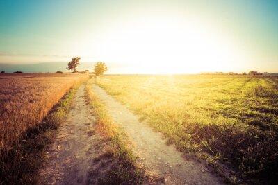 Cuadro Paesaggio de campo e campi di grano al tramonto