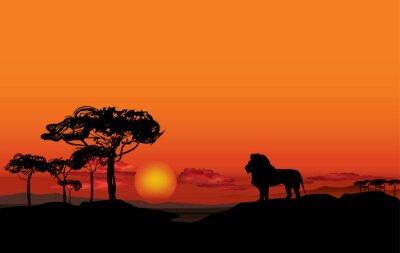 Cuadro Paisaje africano con la silueta animal del león. Savanna puesta de sol de fondo