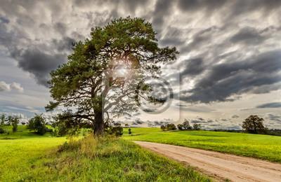 Paisaje de campo con viejo pino solitario y camino sucio
