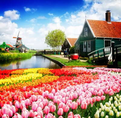 paisaje holandés rural de pequeñas casas antiguas y canal en Zaanse Schans ,, Holanda con flores de tulipán
