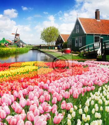 paisaje holandés rural de pequeñas casas de madera y canal en Zaanse Schans, Países Bajos con flores de tulipán
