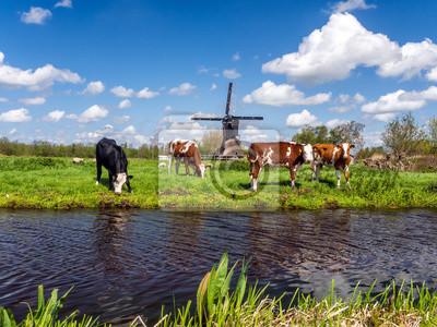Paisaje holandés típico con vacas en el prado y un molino de viento cerca del agua