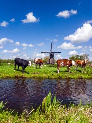 Cuadro Paisaje holandés típico con vacas en el prado y un molino de viento cerca del agua