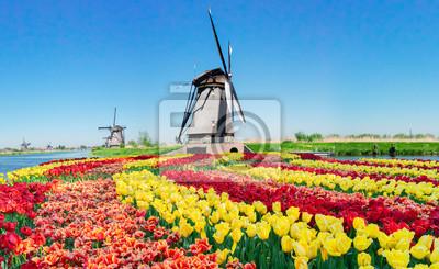 Paisaje holandés tradicional con molinos de viento sobre el agua y tulipanes en Kinderdijk en un día soleado de verano, Holanda