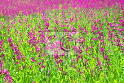 Cuadro paisaje rural de verano con el un prado floreciente