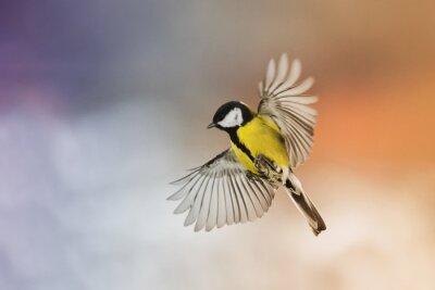 Cuadro Pájaro pájaro mosca estirar sus alas en el cielo al atardecer
