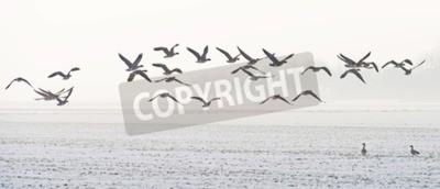 Cuadro Pájaros que vuelan sobre un campo nevoso en invierno