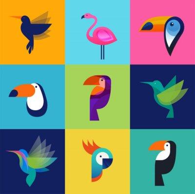 Cuadro Pájaros tropicales - conjunto de iconos vectoriales