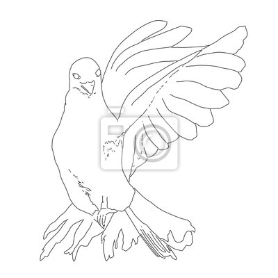 Paloma Línea Ilustración De Vuelo De Dibujo Arte De Volar Paloma