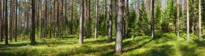 Cuadro Panorama del bosque del verano