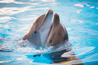 Cuadro par de delfines bailando en el agua