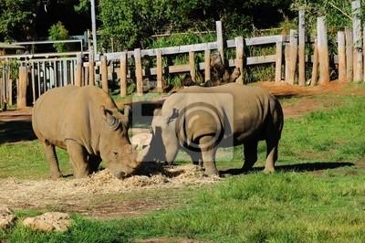 par de rinocerontes
