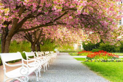 Cuadro Park with blossom sakura, flower lawn and benches