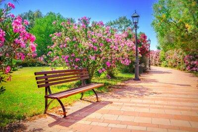 Cuadro Parque de la ciudad