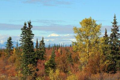 Cuadro Parque Nacional Denali en otoño