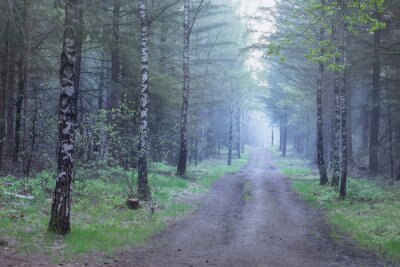 path in misty pine  and birch forest