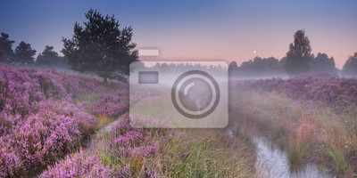 Path through blooming heather at dawn
