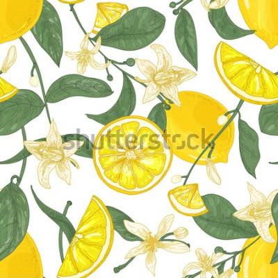 Cuadro Patrón sin fisuras con limones jugosos frescos, enteros y cortados en pedazos, flores y hojas sobre fondo blanco. Telón de fondo con frutas cítricas. Ilustración de vector botánico en estilo antiguo p
