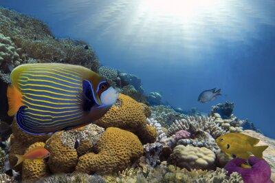 Cuadro Peces tropicales en el arrecife de coral