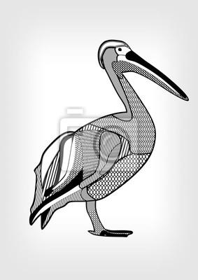 Pelicano Dibujo Blanco Y Negro Del Pajaro De Agua Con Las Partes