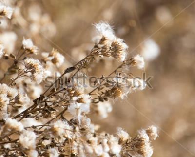 Cuadro pelusa en la planta al aire libre en otoño