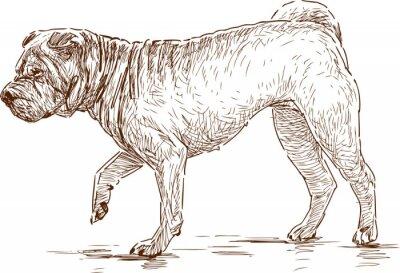 Cuadro perro en una caminata