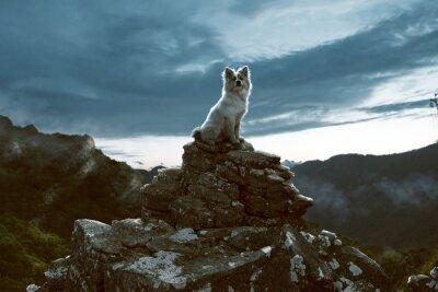 Cuadro Perro se sienta en una roca en las montañas