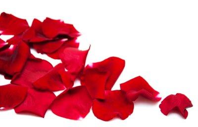 Cuadro Pétalos de rosas rojas