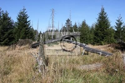 Pinos muertos en el Brocken