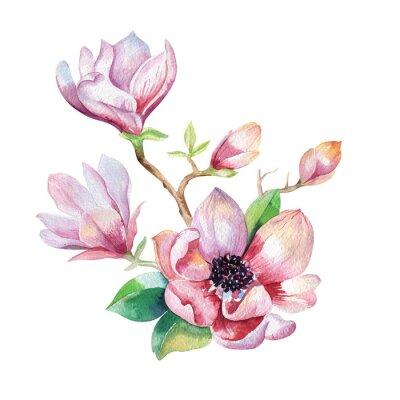 Cuadro Pintura Papel pintado de la flor de la magnolia. Acuarela dibujada a mano floral