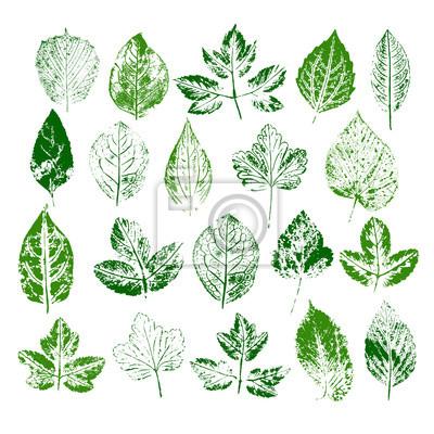 Pintura sellos de diferentes hojas fijaron pinturas para la pared ...