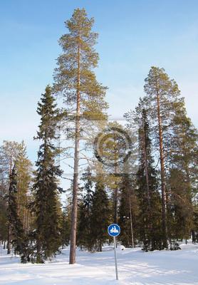 Pista de la nieve en el bosque