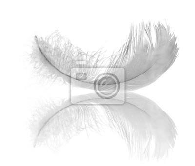 pluma blanca reflexión