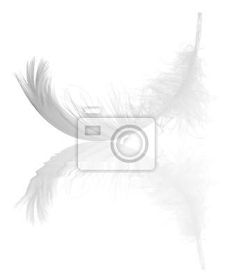 pluma de cisne reflexión rizo