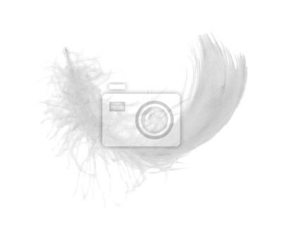 Cuadro plumas de pollo blanco