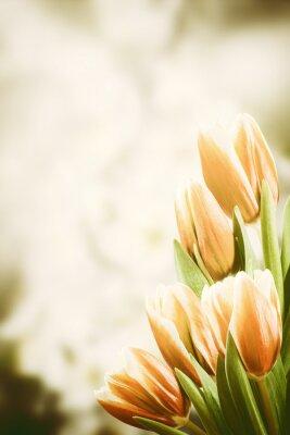 Cuadro Postal del vintage con las flores del tulipán