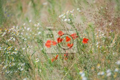 prado de flores silvestres