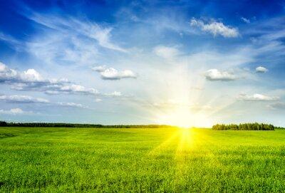 Cuadro Primavera verano campo verde paisaje lanscape