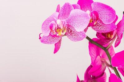 Cuadro Primer plano de la flor de la orquídea
