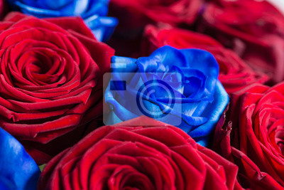 Primer Plano De Un Ramo De Mezcla De Rosas Rojas Y Azules Pinturas