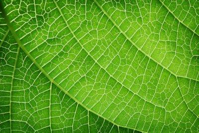 Cuadro Primer plano de una hoja verde