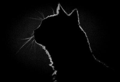 Cuadro Profile cat in the dark