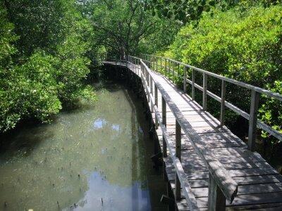 Cuadro Puente de madera en la orilla