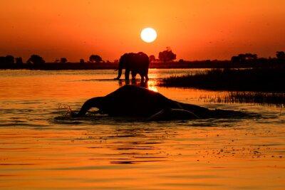 Cuadro Puesta del sol del elefante