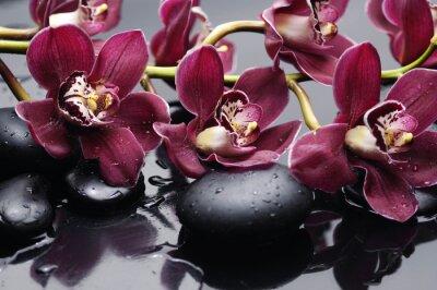 Cuadro ramificación de la orquídea de color rojo con piedras de la terapia
