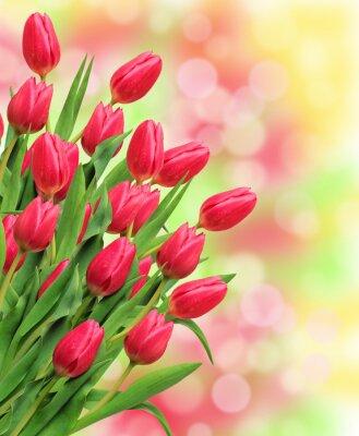 Cuadro Ramo de tulipanes de color rosa sobre fondo de naturaleza brillante