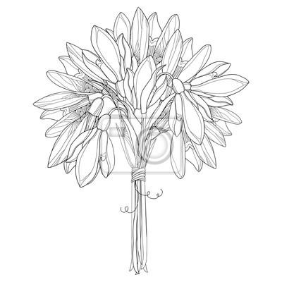 Ramo de vector con el contorno adornado snowdrop flores o galanthus ...