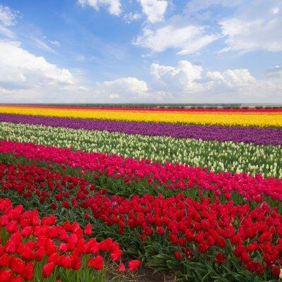 Cuadro rayas resorte de tulipanes en un día soleado